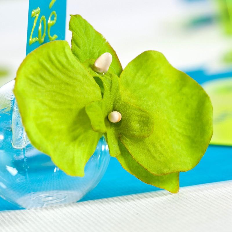 mini orchid es de couleur x6 vert anis. Black Bedroom Furniture Sets. Home Design Ideas