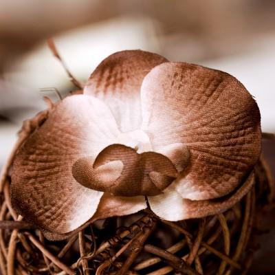 Orchidées à parsemer (x6) chocolat / blanc