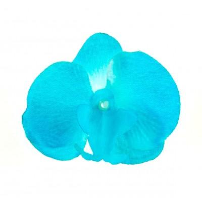 Orchidées à parsemer ( x 6 ) turquoise/blanc