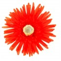 Grands gerberas rouge (x4)