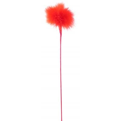 Pomponnette rouge