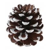 Grande Pomme de pin avec effet neige x 4