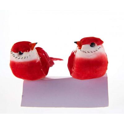 Couple d oiseaux rouge