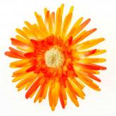 Grands gerberas orange (x4)