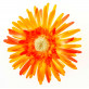Grands gerberas orange (x4)