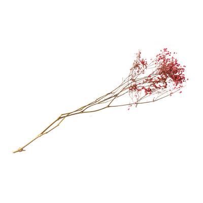 Branche gypsophiles séchées rose